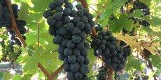 La viticulture n'est pas un long fleuve tranquille.