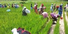 Au Sénégal, les effets de rémission dans le secteur agricole n'ont pas été aussi importants que pour les autres secteurs durant le mois de d'août 2018.