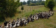 Maïsadour fait partie des coopératives qui ont beaucoup souffert de la crise aviaire.