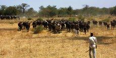 Les fonds de la BAD sont destinés au projet d'appui au développement des chaînes de valeurs agricoles dans les savanes centrafricaines.