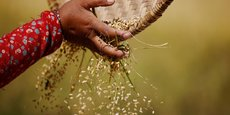 La recherche est plus urgente encore maintenant, pour améliorer la façon dont nous cultivons, transformons et commercialisons les aliments.