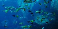 La société bretonne, qui travaille à partir de bio-ressources marines, souhaite recruter de nouvelles compétences.