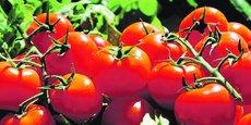 Depuis mars 2018, 70 % de la production des petits fruits (tomates cerises, rondes, allongées, cocktail) ont été commercialisés dans la gamme zéro pesticide.