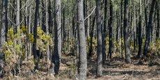 La Nouvelle-Aquitaine dispose de la première surface boisée de France avec 2,84 millions d'hectares de forêt