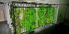 Prima Primorer, une ferme de production de plantes aromatiques et florales en Suède, où les conditions climatiques, la lumière et l'irrigation sont contrôlées pour produire toute l'année.