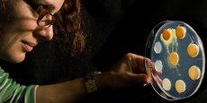Depuis dix ans, la chercheuse Audrey Dussutour observe les comportements du blob qu'elle a découvert en Australie.