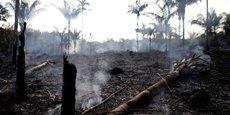 157 sociétés ayant assuré qu'elles ne participeraient plus à la déforestation en 2020, plus de la moitié ont soit déjà complètement abandonné leur promesse, soit repoussé la date limite, soit réduit le périmètre de leurs engagements, révèle un rapport de l'ONG Global Canopy.