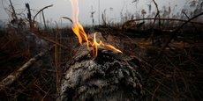 AMAZONIE: LE BRÉSIL DIT AVOIR LES FORCES POUR LUTTER CONTRE LE FEU