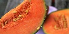 La Nouvelle-Aquitaine produit près d'un tiers des melons français dont 90 % dans l'ex Poitou-Charentes.