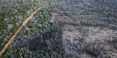 Une partie endommagée de la grande forêt sèche de Menabe Antimena, une zone protégée près de la ville Morondava à Madagascar, le 1er septembre 2019.