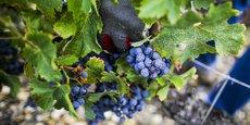 Plus de 400 entreprises de prestation de travaux viticoles sont actives en Gironde