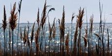 Les récoltes pourraient être affectées par l'appauvrissement des sols, les sécheresses ou les vagues de chaleur, tandis que la pêche pourrait l'être par la surexploitation et la disparition d'espèces en raison du réchauffement de la mer, souligne l'étude.