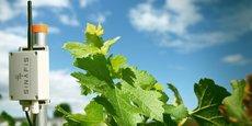 La startup commercialise une sonde qui évalue l'humectation des feuilles, une variable importante dans la viticulture.