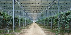 Grâce à ses serres photovoltaïques, Reden Solar fournit aux agriculteurs un environnement favorable aux cultures.