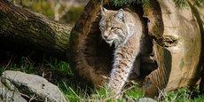 Les animaux seront installés dans 4 zones reconstituant des environnements naturels de l'extrême-orient russe, du Pérou, du Niger et de Birmanie