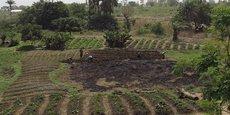 Champs de culture extensive à Djougou, dans le nord-ouest du Bénin,