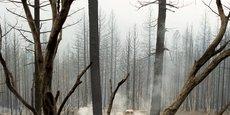 USA: UN FEU DE FORÊT ÉCLATE DANS LA NAPA VALLEY, UN HÔPITAL ET DES CENTAINES DE FOYERS ÉVACUÉS
