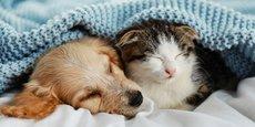 Les animaux de compagnie constituent un marché solide qui progresse régulièrement et se numérise à grande vitesse.
