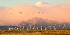 Aujourd'hui, Biodiv-Wind dispose d'une base de données de plus d'un million de vidéos qualifiées par des ornithologues.