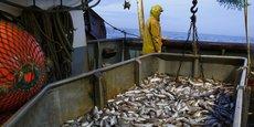 Pour le poisson, côté français, toute la côte est une zone nourricière. À mesure qu'il grandit, il va prendre le large, et c'est pour ça qu'on va pêcher côté anglais, car on veut pêcher du poisson adulte, explique Pierre Leprêtre, artisan-pêcheur des Hauts-de-France.