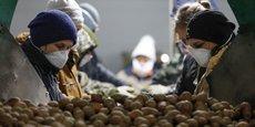 Photo d'illustration. L'organisation rassemblant les producteurs de pommes de terre du nord-ouest de l'Europe (NEPG) vient de recommander aux agriculteurs de réduire de 20% les superficies de pommes de terres, qui seront mises en place au printemps. Objectif: éviter une surproduction et une chute des prix.