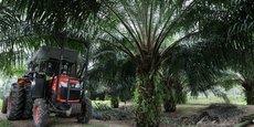 Après le géant du secteur FGV Holdings, l'autre groupe malaisien Sime Darby se voit interdire la vente de son huile de palme aux Etats-Unis.