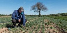 Cette nouvelle zone agro-culinaire de 30 hectares, qui comportera un espace dédié aux maraichers locaux, a pris un peu de retard mais représentera un investissement global de 10 millions d'euros.