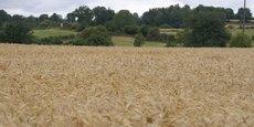 En France, ce projet est le seul à proposer des projections à une échelle aussi fine, rappelle Olivier Tourand, agriculteur de la Creuse et référent du projet AP3C. Il estime lui aussi que d'autres secteurs pourraient s'emparer de cette modélisation pour éclairer leur choix.