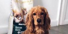 Ultra Premium Direct est spécialisée dans la vente directe en ligne d'aliments pour animaux de compagnie fabriqués en France.