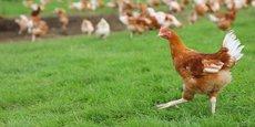Avec le concours de la coopérative Terrena, la société Vendéenne, basé à Saint-Hermine, Bodin Bio a déployé la première filière française de volailles 100% bio.