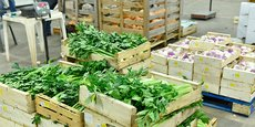 Le 17 mai, différents acteurs de la filière agroalimentaire se sont réunis au MIN de Montpellier (photo) pour y lancer lancer un appel aux consommateurs, restaurateurs, commerçants, mais aussi acteurs publics, à privilégier une production locale.