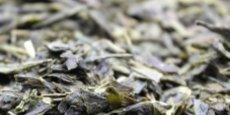 La jeune pousse ligérienne FBKT qui propose déjà plus de 500 références de thés et infusions, a désormais une ambition : faire pousser du thé en France, dans la Loire. Avec un premier objectif : parvenir, d'ici dix ans, à une autoproduction de 30%, soit 1.200 kilos de thés par an sur la base de l'activité actuelle.