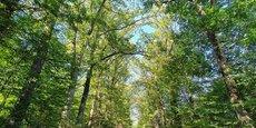 Les 390.000 hectares de forêts de la région des Pays de la Loire sont à 92%  détenues par des propriétaires forestiers privées.