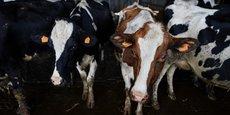 Si la France ne parvient pas à rééquilibrer la pyramide des âges dans la profession, la production laitière nationale pourrait drastiquement décroître dans les années à venir.