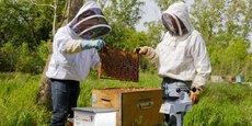 Le compteur permettra d'établir un lien de cause à effet entre la pollution de l'environnement et la surmortalité des abeilles.