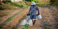 La généralisation des pratiques agroécologiques, supprimant mécanisation excessive et usages des intrants chimiques, nécessitera plus de main d'œuvre dans les champs.