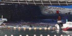 Selon une organisation écologiste, plus de 600 dauphins on été tués à Taiji sur les 1.200 qui ont été piégés dans la baie depuis le 1er septembre
