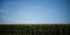 L'un des projets vise à améliorer la rentabilité et la compétitivité de la production de maïs sur le territoire du Sud-Ouest.