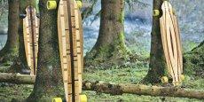 Le longboard de la start-up In'Bô - en forêt en patois vosgien.