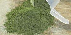 La spiruline, microalgue bourrée de protéines et d'oligoéléments. Près de 90% de la spiruline consommée en France est produite en Chine. / DR