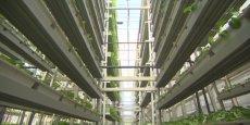 La première ferme verticale à Singapour / reuters