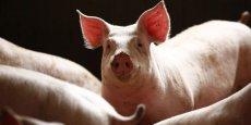 La filière porcine européenne est affectée depuis le 29 janvier par un embargo russe.