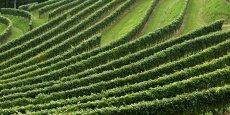 Solarvi vise à valoriser le CO2 émis par la fermentation du raisin