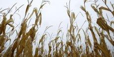 L'agriculteur charentais utilisait l'herbicide Lasso dans sa culture du maïs.
