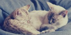 Deux des futurs pensionnaires du café à chats lyonnais. Crédit photo: DR