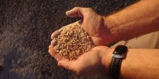 Le houblon réprésente 0,5 % des ingrédients de la bière.