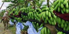 Le marché mondial de la banane est contrôlé à 80% par quatre multinationales: Chiquita, Fresh Del Monte, Dole Food et Fyffes.