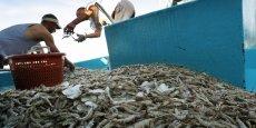 Des consommateurs russes ont retrouvé à Koursk des crevettes provenant de... Biélorussie. Un pays n'ayant pas d'accès à la mer.