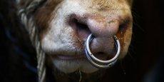 La futur grande région sera le leader de la viande bovine