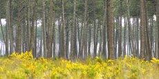 Xyloforest, plateforme de recherche, d'innovation et de services pour les systèmes forêts cultivées (produits & matériaux bois), fait partie des équipements d'excellence labellisés par le Programme des investissements d'avenir (PIA).